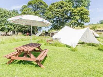 "Belle ""the basic bell tent"" at The Paddock"
